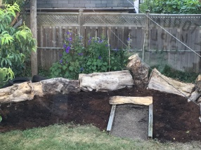 Morning glory wall growing behind the tree stumps
