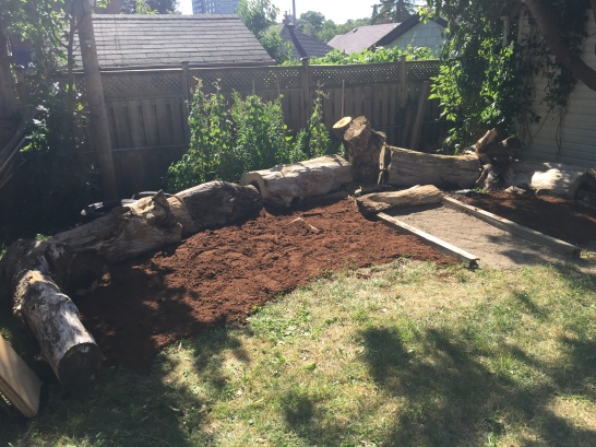 Dirt and peat moss cover