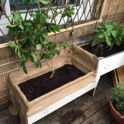 drawer planter